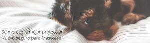 mascotas-slide1